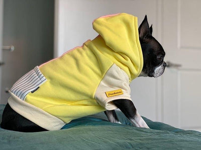 Boston Terrier raza sudadera con capucha