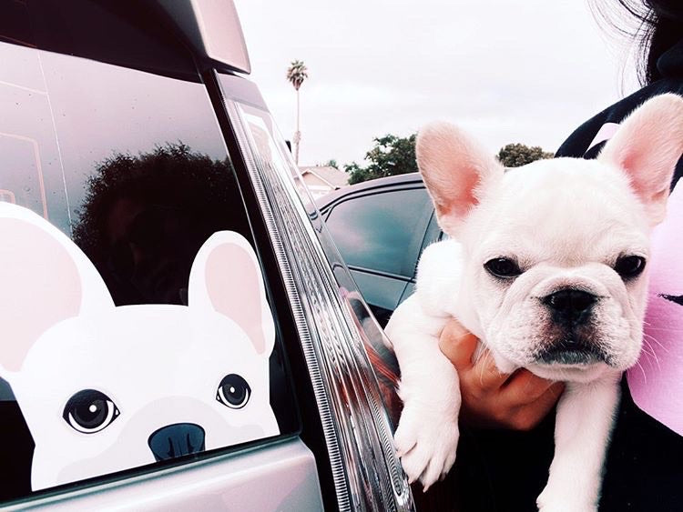 Frenchie Sticker | Frenchiestore | White French Bulldog Car Decal, Frenchie Dog, French Bulldog pet products