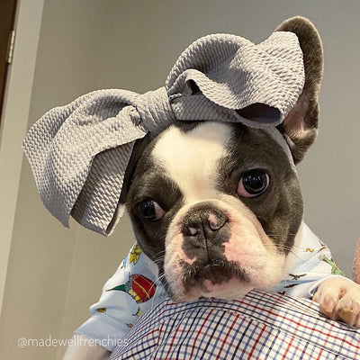 Frenchie puppy dog bow