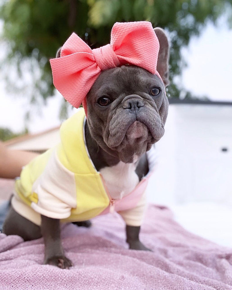 Frenchiestore Pet Head Bow | pesca