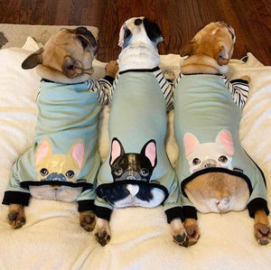 three french bulldogs one fawn frenchie one black pied frenchie one cream frenchie all wearing frenchie pjs made by frenchie store