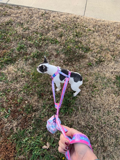 Dual dog leash Frenchiestore