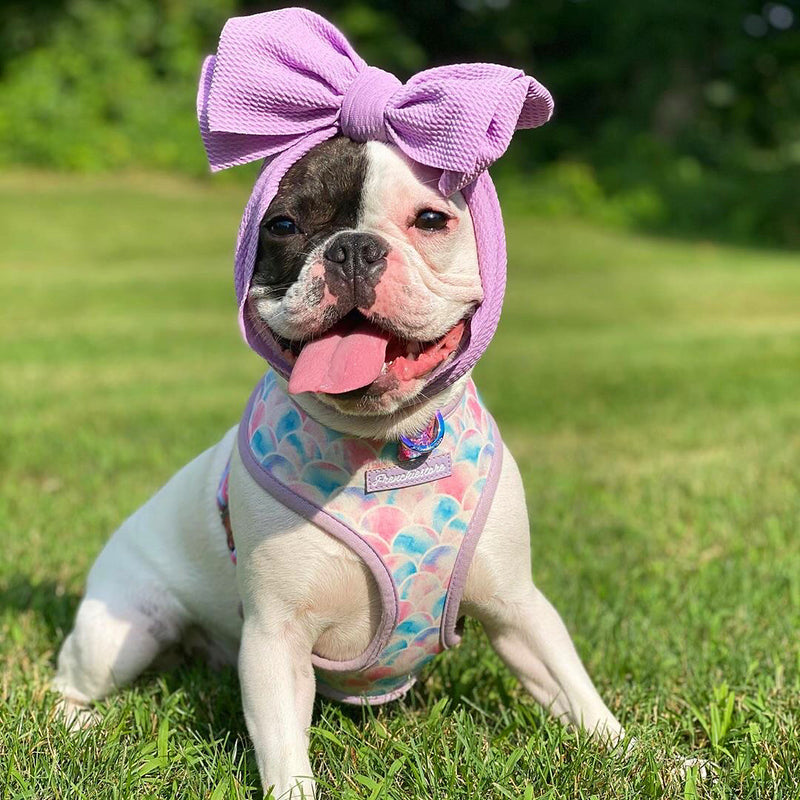 Frenchiestore Pet Head Bow | Lavendel
