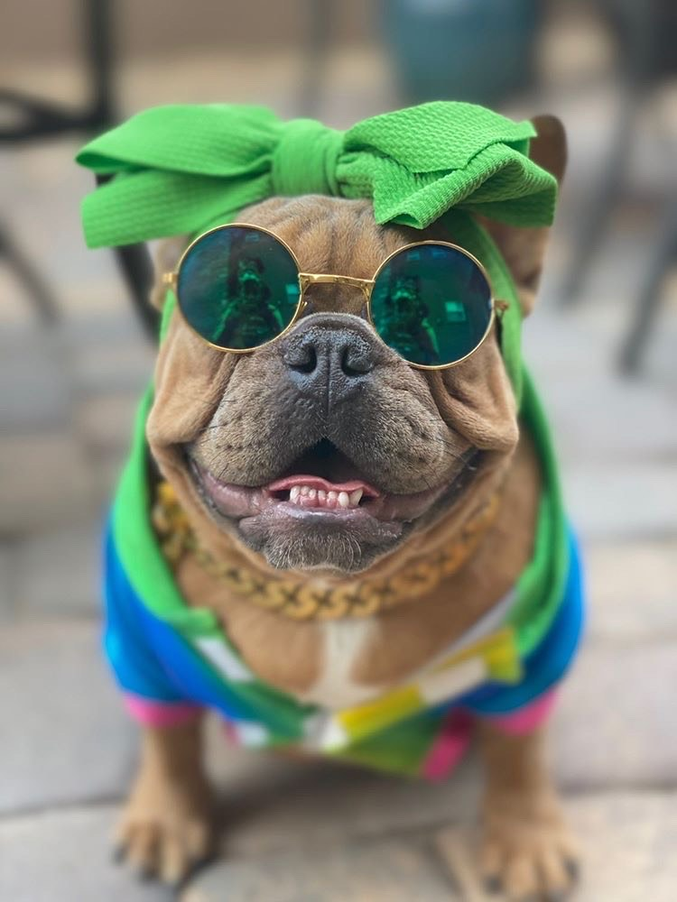 Frenchiestore Pet Head Bow | Green