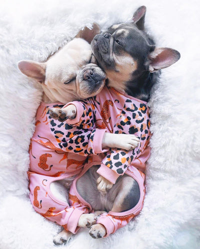 French Bulldogs in bed cuddeling with organic pajamas wild one made by Frenchiestore