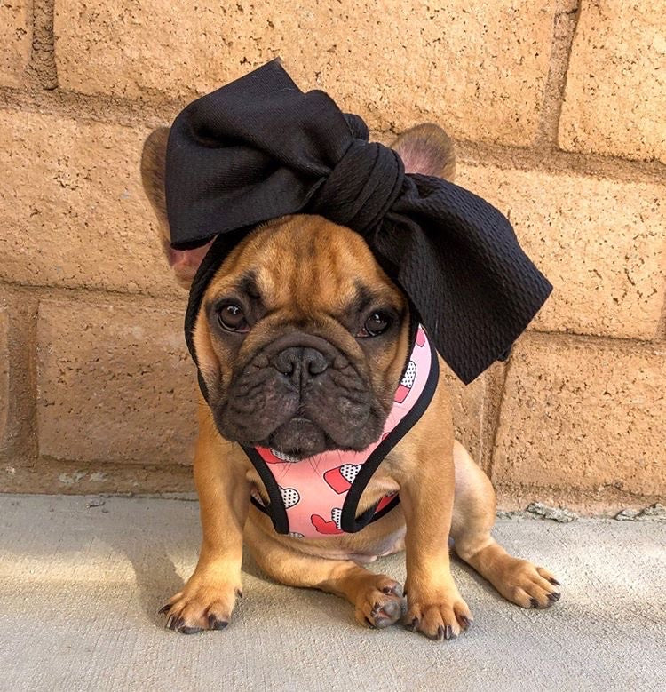 Frenchiestore Pet Head Bow | Black, Frenchie Dog, French Bulldog pet products