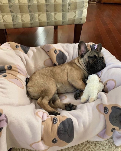 Fawn Frenchie Decke Frenchiestore