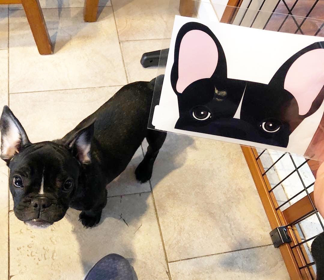 Frenchie Sticker | Frenchiestore |  Black W Line French Bulldog Car Decal, Frenchie Dog, French Bulldog pet products