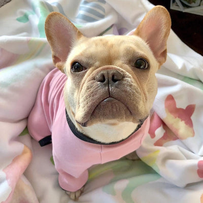 بطانية Frenchie