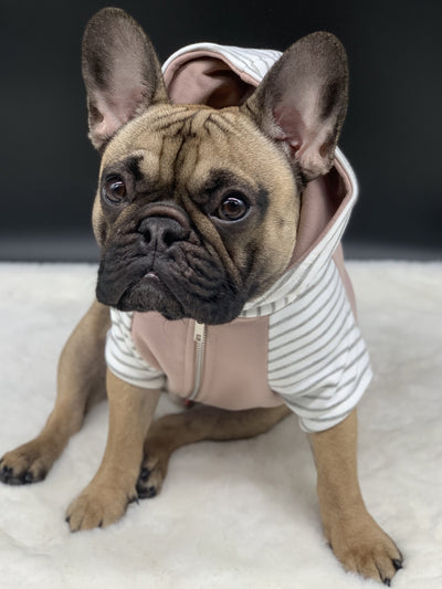 Shop Frenchie dog hoodie
