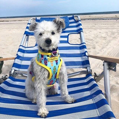 mixed breed dog on the beach cute frenchiestore harness