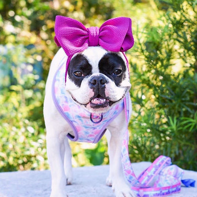 Cute girl French Bulldog wearing Frenchiestore head bow