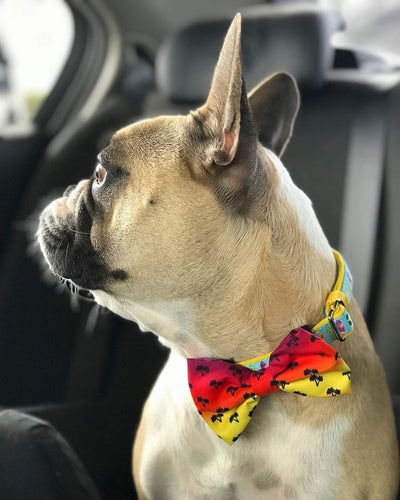 Frenchie Hundehalsband