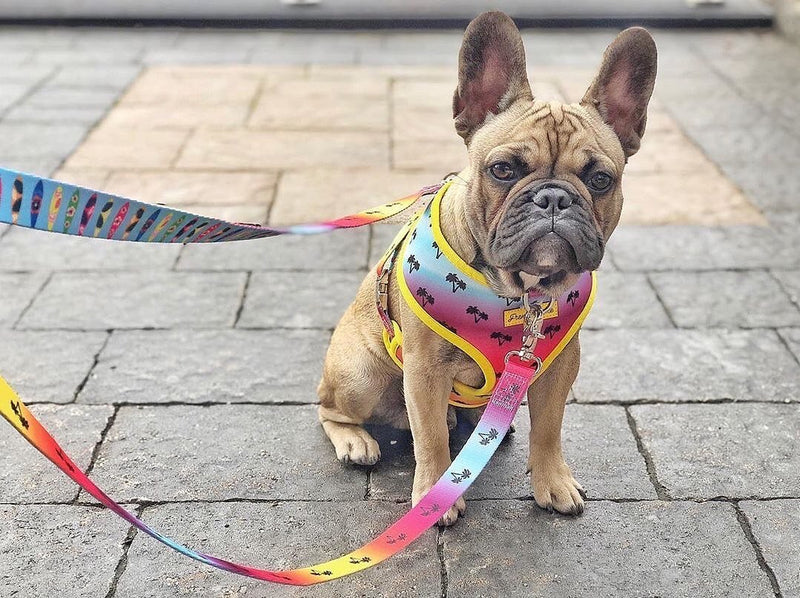 Frenchiestore Multiple Configurations Health Leash | California Dreamin'