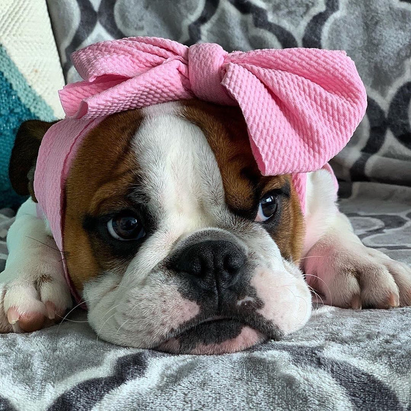 FRENCHIESTORE DOG BOW