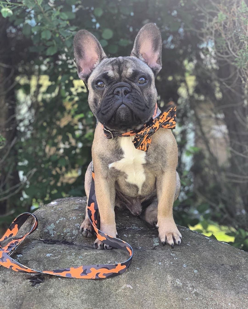 Frenchiestore Breakaway Dog Collar | Moutarde Ultime Camo