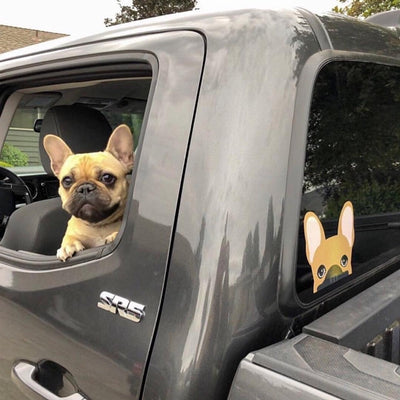 Frenchie Sticker | Frenchiestore | Calcomanía de coche Fawn W / Mask French Bulldog