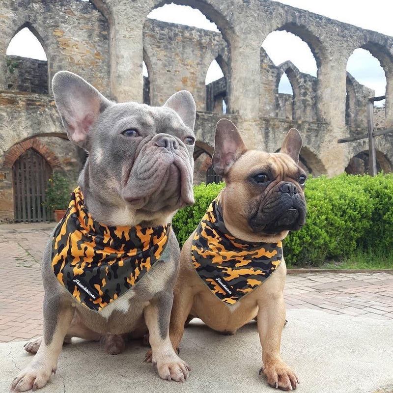 Frenchiestore Dog Cooling Бандана | Горчица Ultimate Camo