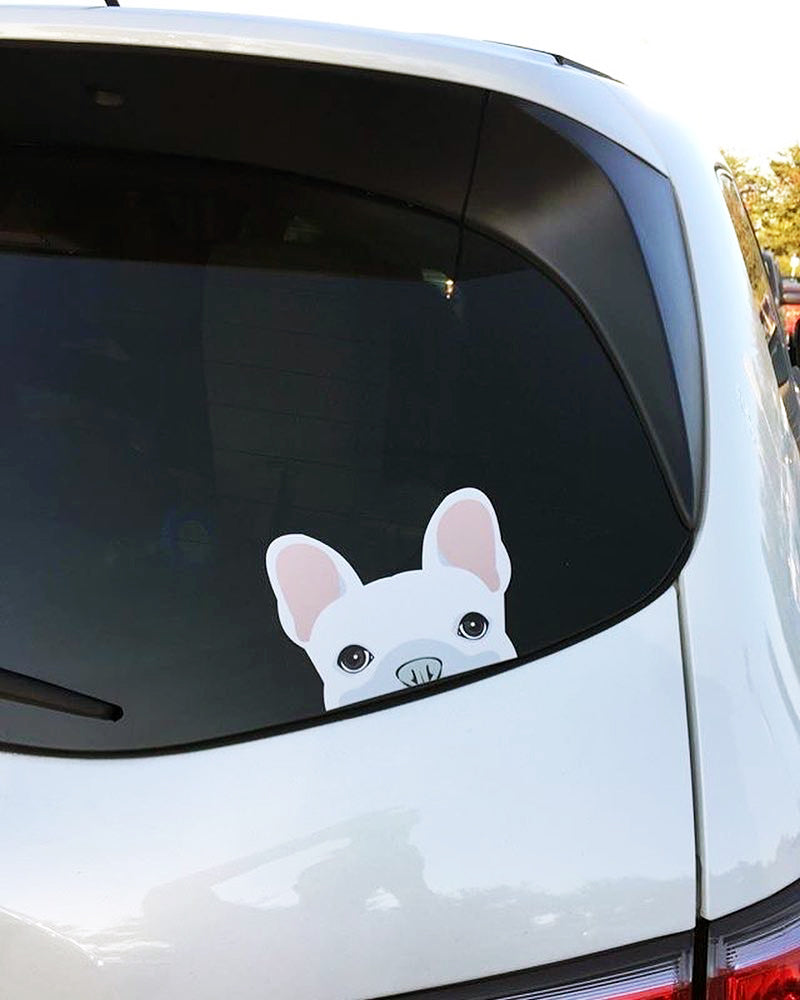 Autocollant Frenchie | Frenchiestore | Sticker voiture blanche bouledogue français
