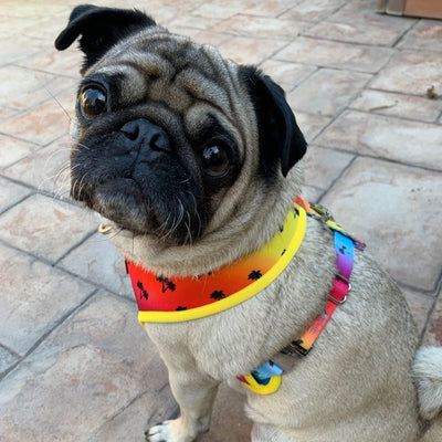 best pug dog harness custom made by Frenchiestore