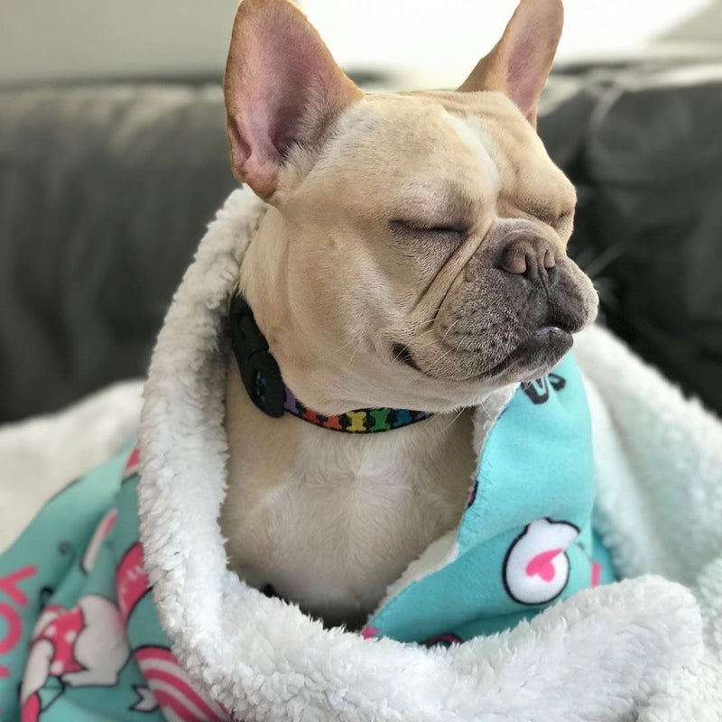 Frenchie Blanket | Frenchiestore | Bulldog Francés Amor