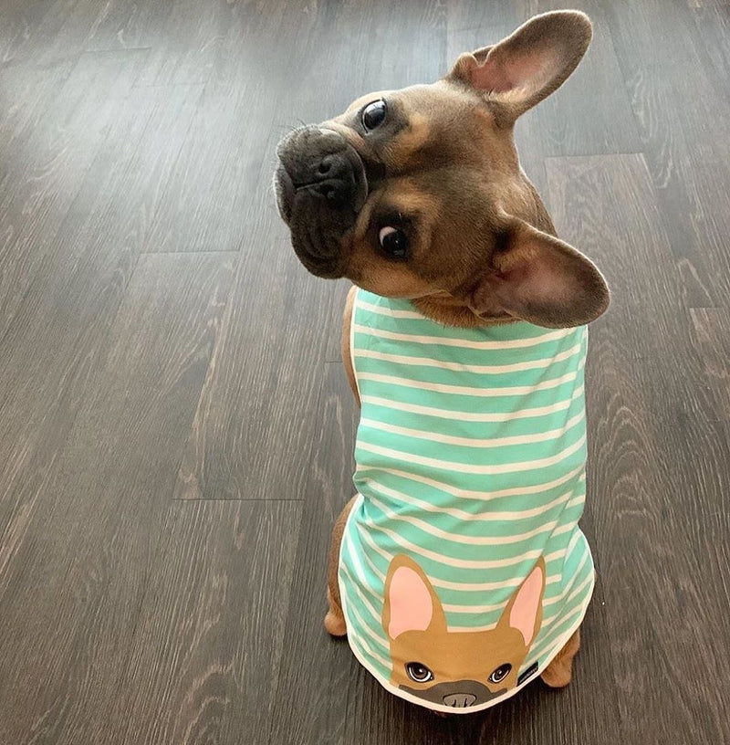 Frenchie Shirt | Frenchiestore | Fauve Bouledogue Français en Aigue-Marine