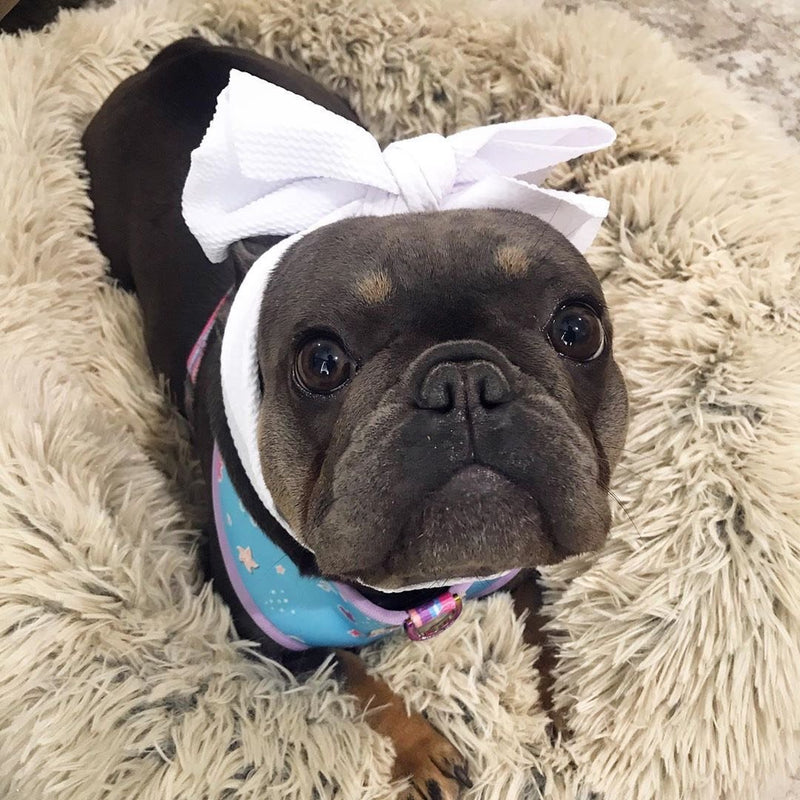 Frenchiestore Pet Head Bow | blanc