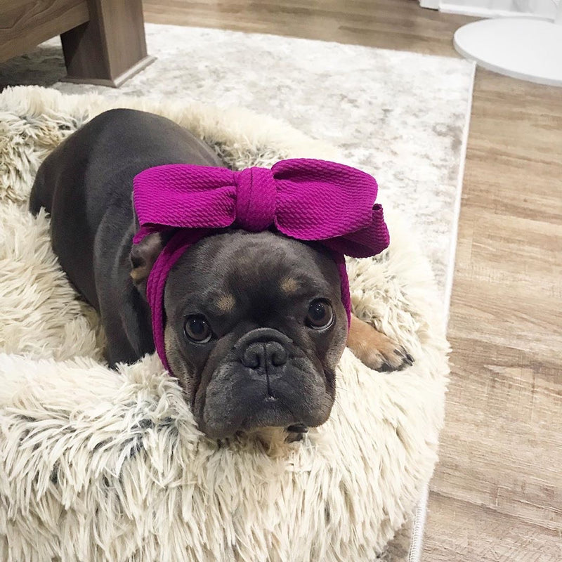 Frenchiestore Pet Head Bow | Betterave