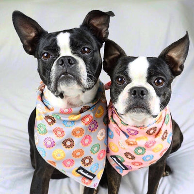 Frenchiestore Dog Cooling Bandana | Pink StarPup