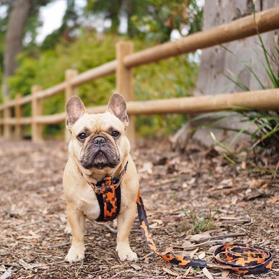 Camo Frenchie dog harness