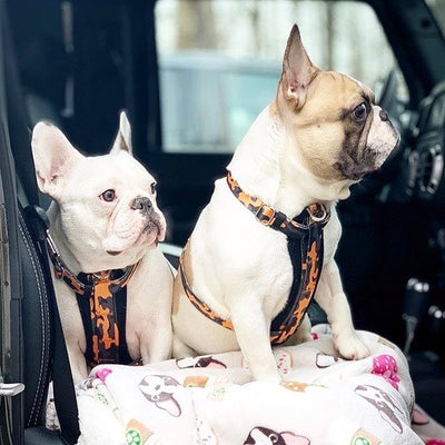 Frenchie dog harness