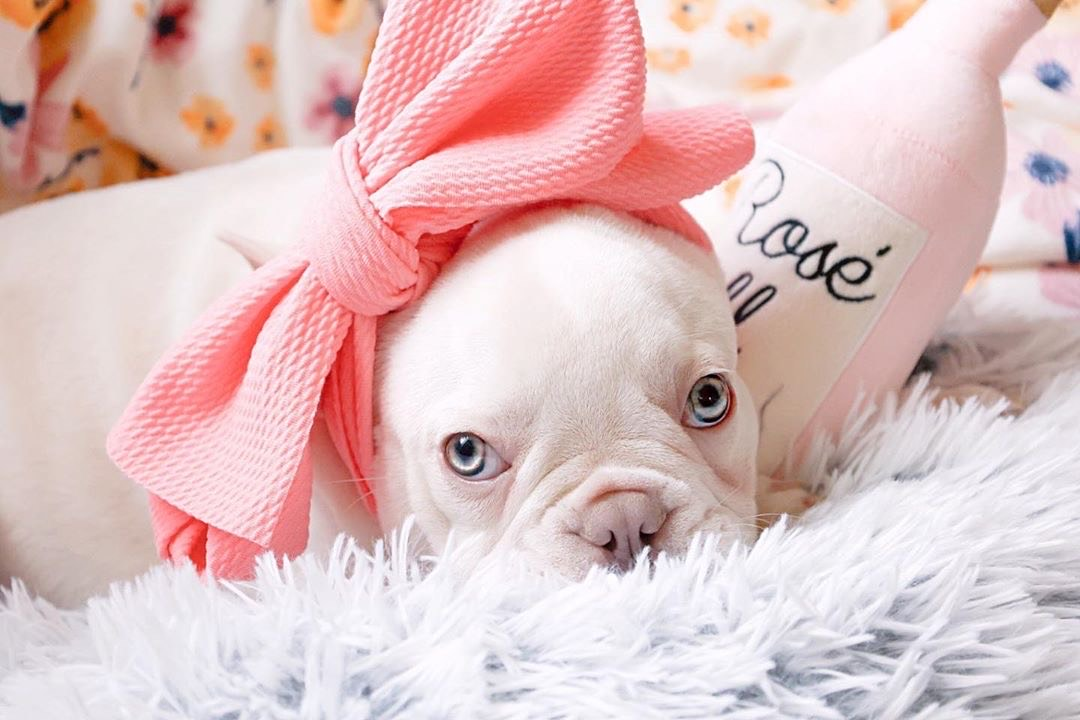 Frenchiestore Pet Head Bow | Peach