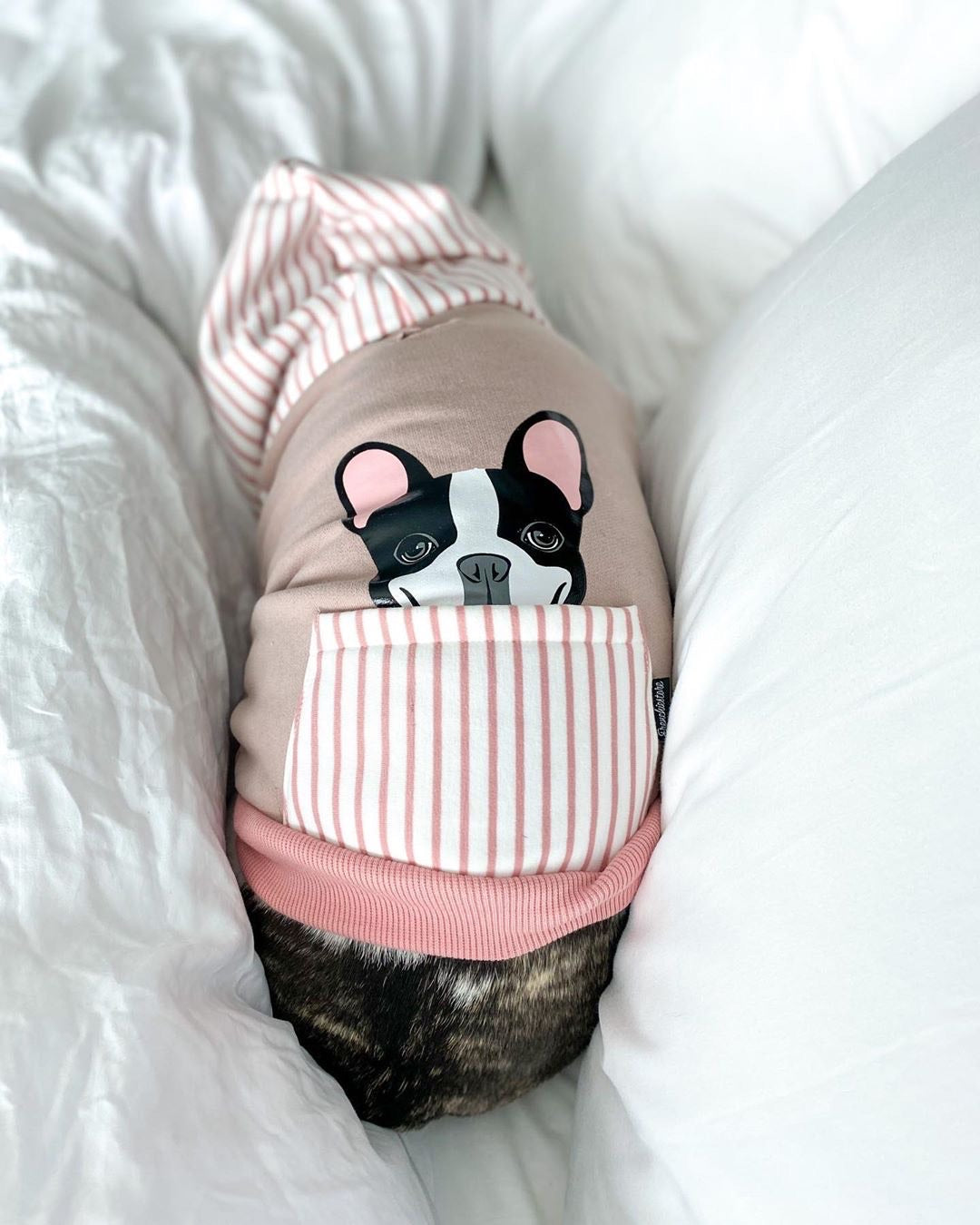 French Bulldog hoodie in pink | Frenchie Clothing | Black Pied Frenchie dog, Frenchie Dog, French Bulldog pet products