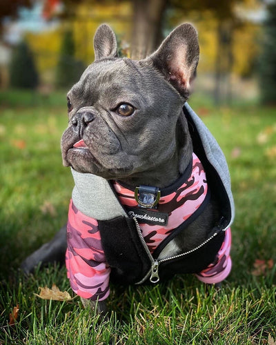 Clefty French Bulldog