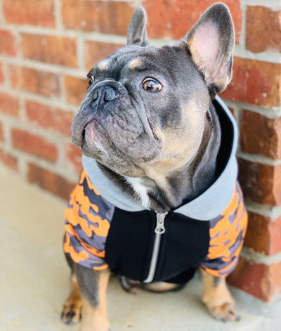 Frenchie dog jacket