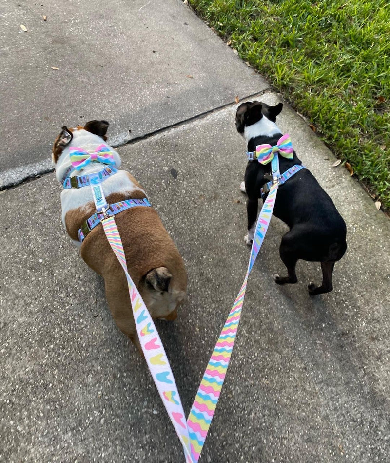 Frenchiestore Multiple Configurations Health Leash | Ice Cream