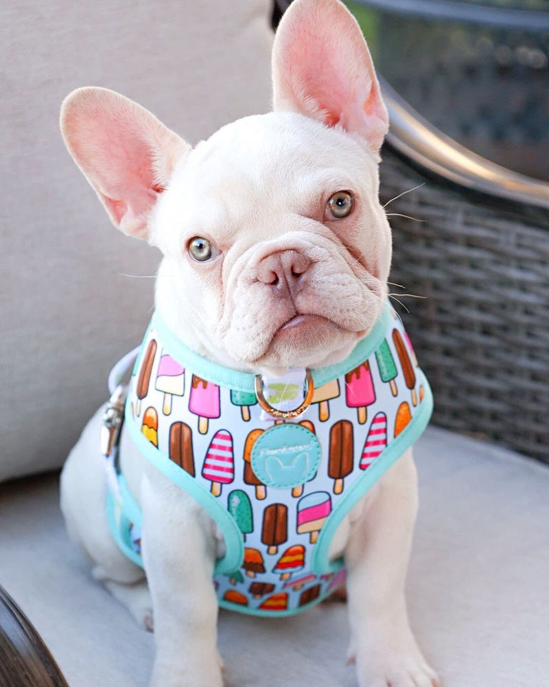 French Bulldog Harness | Versatile Health Harness | Ice Cream