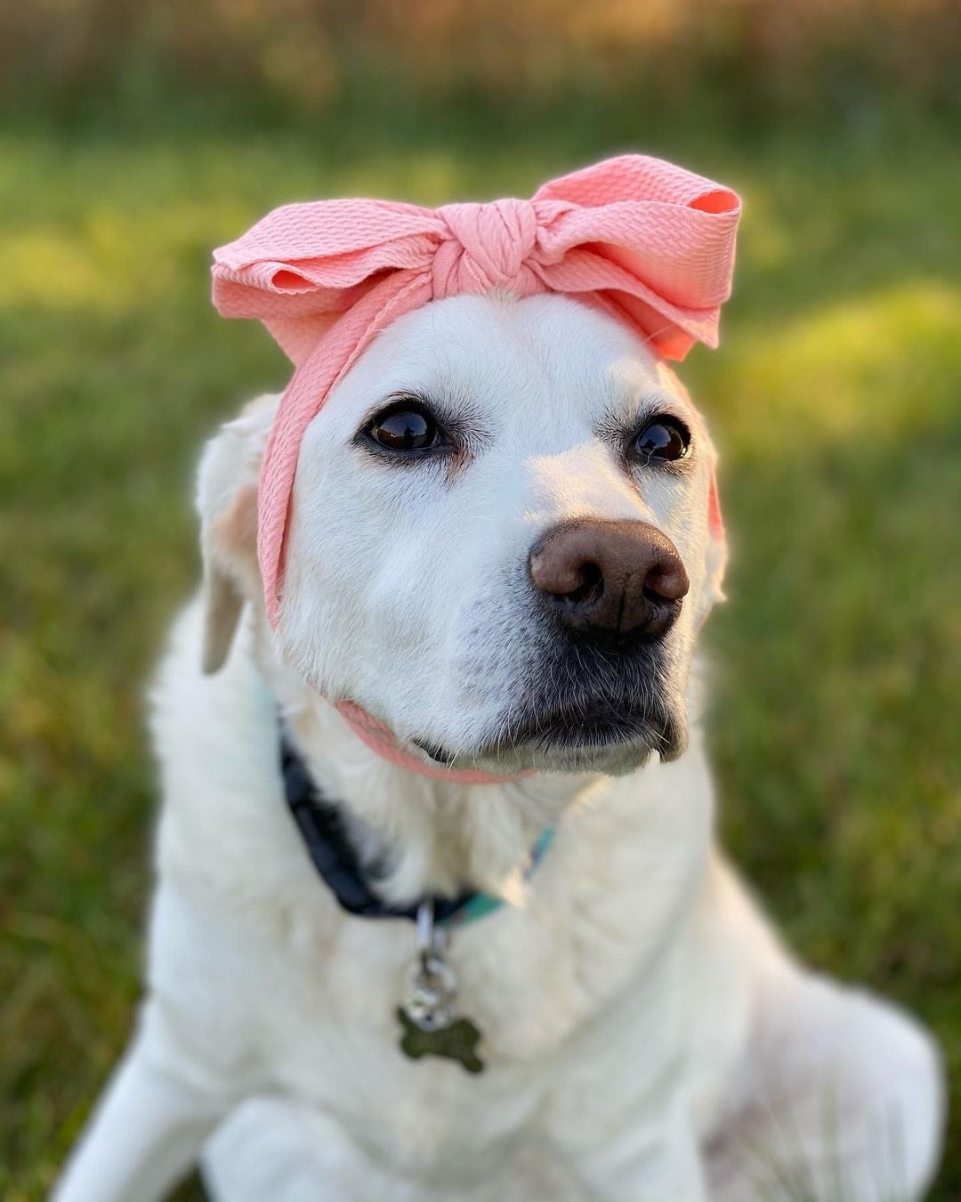 Frenchiestore Pet Head Bow | Light Peach
