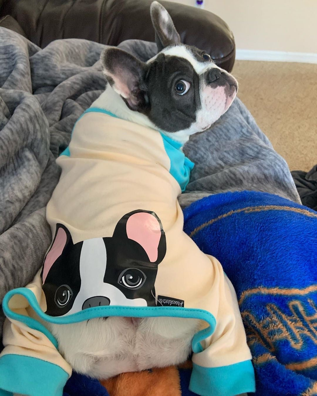 French Bulldog Pajamas in Aqua | Frenchie Clothing | Black Pied Frenchie Dog, Frenchie Dog, French Bulldog pet products