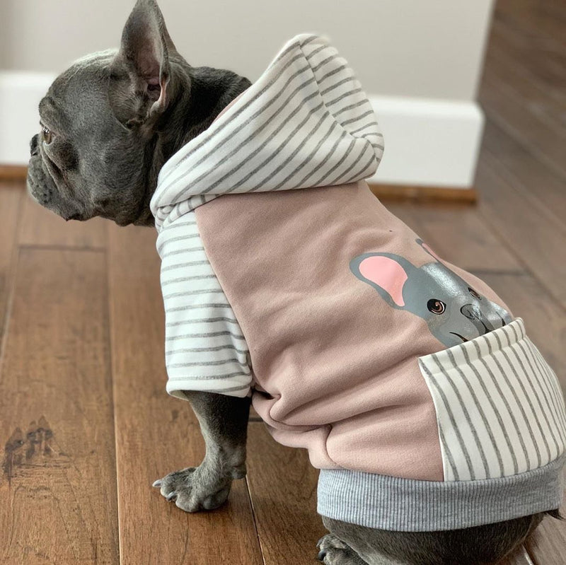 French Bulldog Hoodie in Gray | Frenchie Clothing | Blue Frenchie dog