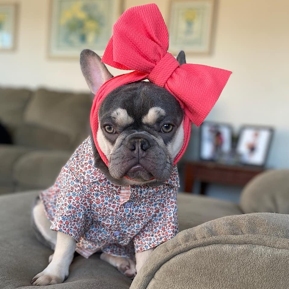Frenchiestore Pet Head Bow | Hot Pink