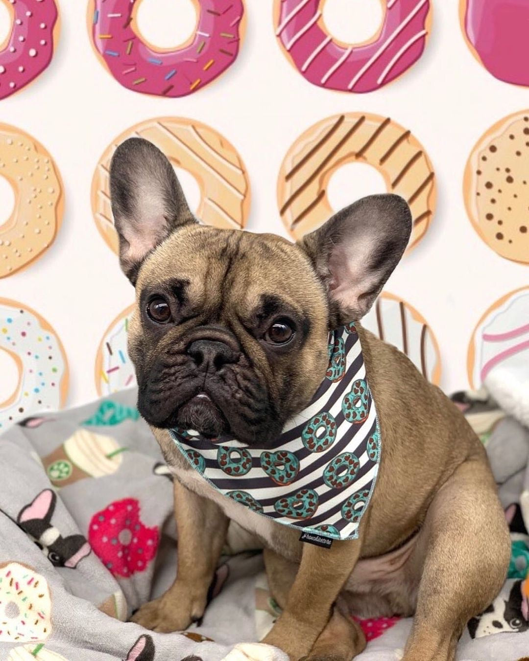 Frenchiestore Dog Cooling Bandana |  Frenchie Love in Teal, Frenchie Dog, French Bulldog pet products