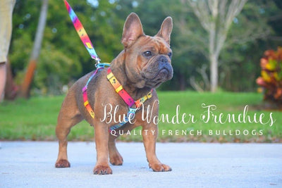 Pet luxury leash by Frenchiestore