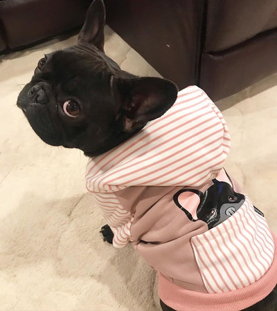 Frenchie hoodie