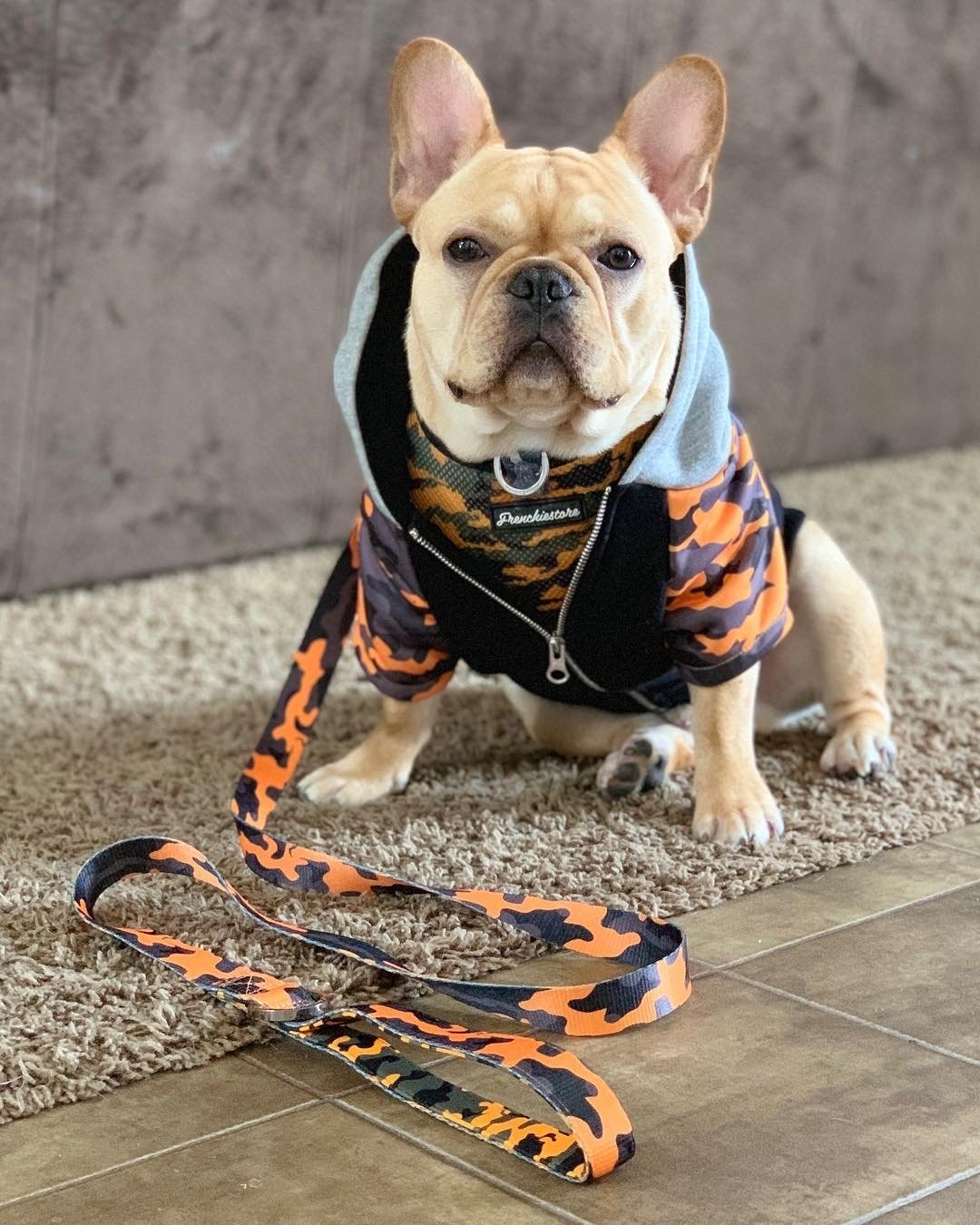 Luxury Leash | Mustard Ultimate Camo, Frenchie Dog, French Bulldog pet products
