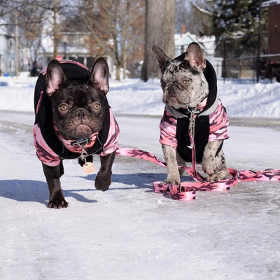 French Bulldogs wearing pink camo Frenchie hoodies