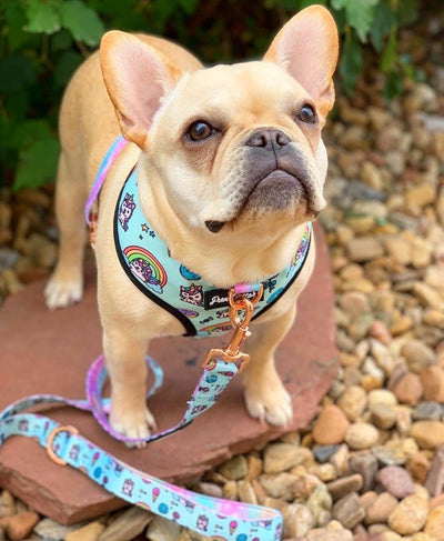 Frenchie puppy dog leash