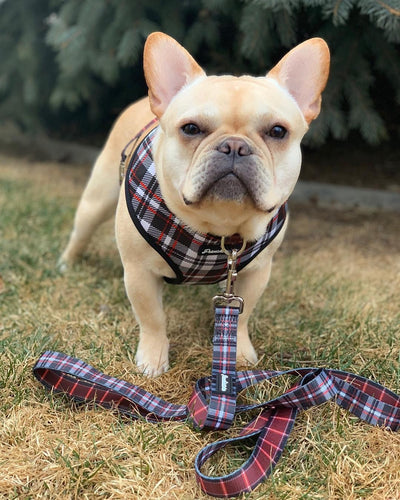 Imbracatura reversibile Frenchie in Tartan