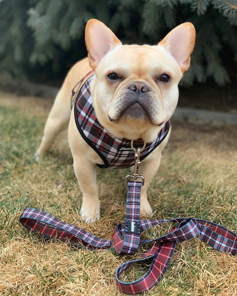 Frenchiestore Luxus Hundeleine | Tartan