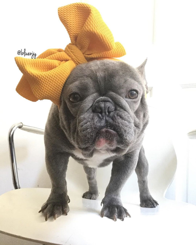 Frenchiestore Pet Head Bow | Moutarde